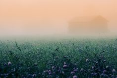 Mist by RobinHedberg  I just adore pictures of fog and mist!