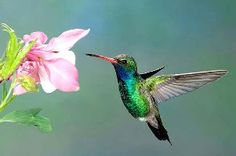 Butterflies and Hummingbirds are going extinct join my quest to save their Habitat