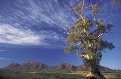 The Tailor creates hand-crafted Australian holidays and unforgettable experiences. Let the Australian luxury travel experts plan your holiday today. South Australia, Australia Travel, Australian Holidays, Eucalyptus Tree, Tour Operator, View Image, Luxury Travel, National Parks, Tours