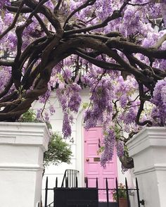 Good morning ... More wisteria loveliness  and how about the pink door…