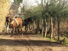 Horses, Wine, Animals, Animales, Animaux, Animal, Animais, Horse