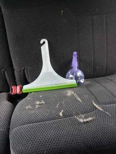 Utilisez une raclette pour enlever les poils d'animaux des tissus d'intérieur de votre voiture
