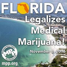 Florida passes Amendment 2! Congratulations    #cannabissativa #cannabis#marijuana#popquiz#fun#happy#cannabiscommunity #weed#happy420#stonner#smartstoner#medicalmarijuana #follow#thegimmicks#like#me#legalizeit#ganja#legal#thc#cbd #cbdoil#plant#herbs#organic