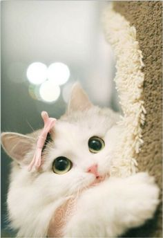 Adorable Cat, Want To Fondled It. Cute Baby Cats, Cute Cats And Kittens, Cute Funny Animals, Cute Baby Animals, Kittens Cutest, Funny Cats, Pretty Cats, Beautiful Cats, Animals Beautiful
