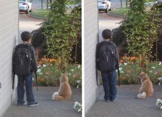 The cat waits for coming a bus with her owner every day.