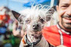 Rascal The Cutest Dog At The World's Ugliest Dog Contest and he won!!