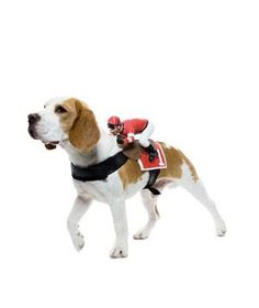 Jockey Costume #halloween #pets #costume