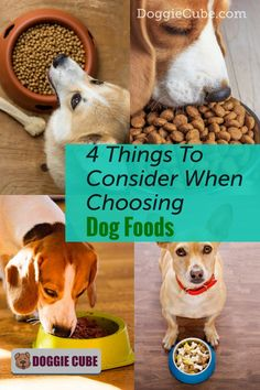 There are several factors to consider when choosing the right food for your dog. Different dogs have different nutritional needs at different stages in their lives. Here are some things to consider when selecting the food you'll give your dog. Dog Nutrition, Dog Diet, Guide Dog, Different Dogs, Dog Care Tips, Homemade Dog Food, Nutritious Meals, Dog Grooming, No Cook Meals