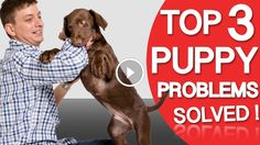 3 Puppy Problem! Biting, House Training & Chewing - Dog Videos