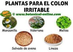 plantas para el colon o intestino irritable