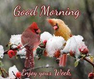 Good Morning Enjoy Your Week