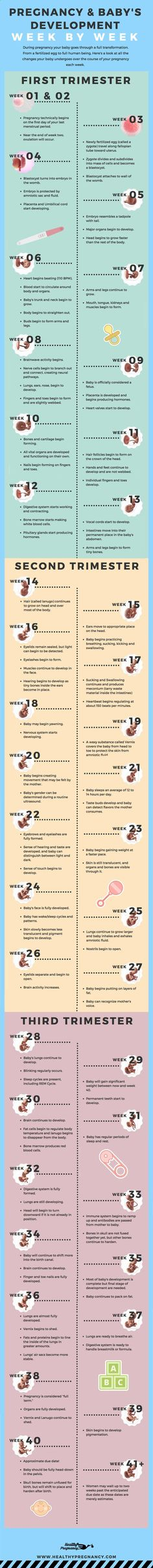 Pregnancy is a nine-month rollercoaster of changes. This guide can help you understand the changes your baby will be going through during each week of your pregnancy. Pregnant | Week by Week | Calendar | Pregnancy Calendar | Babys Development | Fetus Development | Babys Growth