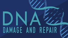 What happens when your DNA is damaged? – Monica Menesini What happens when your DNA is damaged? Dna Genetics, Molecular Genetics, Human Dna, Human Genome, Ap Biology, Teaching Biology, Science Lessons, Life Science, Science News
