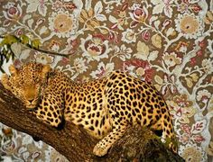 It's time for the world to look at one another not as a black race or a white race but as a human race. Cheetah Print Shirts, Jaguar, Gorgeous Women, Art Inspo, Bohemian Style, Animal Print Rug, Creatures, Kawaii, Floral