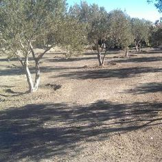 Work away on an Organic Olive Grove in the desert of Southern Spain - workaway.info