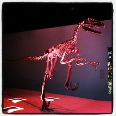 """Houston Museum of Natural Science makes great use of Instagram! """"Instagram / glutenqueen #hmnspaleo"""""""