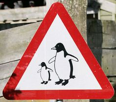 I want to go somewhere that a penguin crossing sign is necessary.