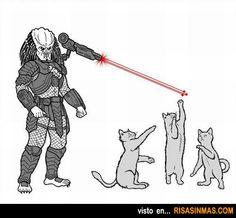 Predator (Depredador) el terror de los gatos.