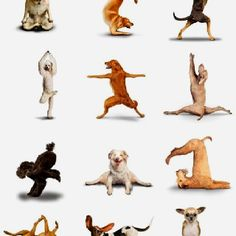 Yoga ones 5, Animal Yoga