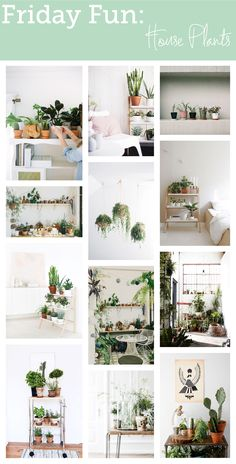 Friday Fun: House Plants - bungalowsandolives.com