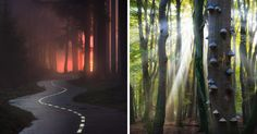 10+ Photos That Reveal The Magic Of Dutch Forests | Bored Panda