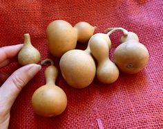 Make things out of small gourds, like bowls, ornaments, little painted containers...