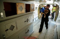 Lead dog drop handler, Shannon Post and Ryan Air employees load 72 dropped dogs into a CASA airplane at the Galena airport during the 2017 Iditarod on Friday afternoon March 10, 2017.Photo by Jeff Schultz/SchultzPhoto.com (C) 2017 ALL RIGHTS RESERVED
