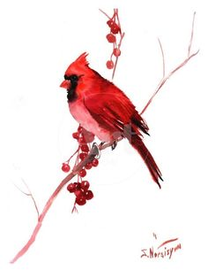 Red Northern Male Cardinal, 12 X 9 in, original watercolor painting, red bright birds, christmas birds Cardinal Bird Tattoos, Cardinal Drawing, Cardinal Birds, Cardinal Paintings, Bird Paintings, Watercolor Bird, Watercolor Paintings, Watercolor Tattoo, Christmas Bird