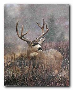 Mule Deer Big Antler Rack Wildlife Hunting Wall Decor Art Print Poster 16x20 *** You can find out more details at the link of the image.