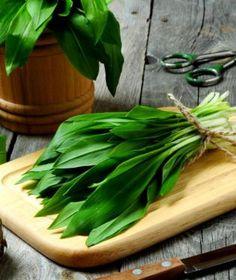 Medvědí česnek je typická jarní bylinka, kterou si můžeme začerstva užívat jen asi měsíc v roce. Korn, Celery, Vegetables, Syrup, Vegetable Recipes, Veggies