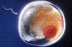 Cientistas sequenciam genoma do espermatozoide humano - INFO