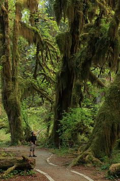 Hall of Mosses, Hoh Rain Forest, Olympic National Park, Washington. I definitely have to go to Olympic National Park, it's so beautiful - Maravilloso Places To Travel, Places To See, Ville New York, Photo Animaliere, Jolie Photo, Parcs, Adventure Is Out There, Vacation Spots, Travel Usa