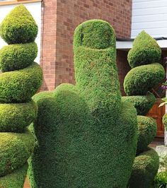 "A British gardener is getting into hot water because of a topiary bush he trimmed to look like the middle finger.   Authorities have asked him to change it but he says ''I don't see why I should have anybody telling me what to change in my garden,"" His refusal to comply has inspired locals to start a ""Save The Bush"" campaign."