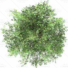 trees top view - Google-søgning