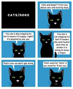 The real difference between cats & dogs.