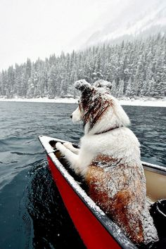 """Upper Kananaskis Lake von Rachael Rodgers"" - It's a Man's Sport/Adventure - Hunde bilder Animals And Pets, Funny Animals, Cute Animals, I Love Dogs, Cute Dogs, Fun Dog, Photo Animaliere, Tier Fotos, Mans Best Friend"