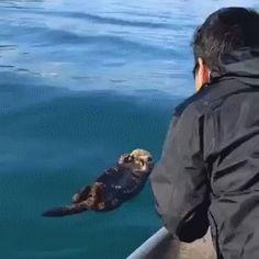 Wake Up Otter
