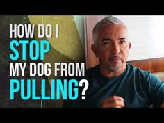 Dog Trainer: Cesar Millan talking about pulling on leash – Sam ma Dog Training Leash Training, Training Your Puppy, Dog Training Tips, Training Schedule, Training Videos, Dog Whisperer, Easiest Dogs To Train, Dog Training Techniques, Look Here