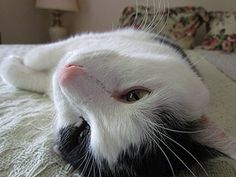 Friday Cat Blogging - 20 July 2012