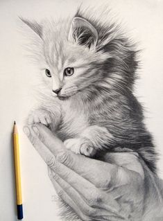 Little kitten in graphite by mo62.deviantart.com on @DeviantArt