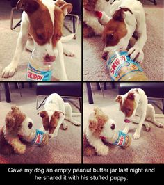 Funny Pictures Of The Day - 100 Pics Dog shares jar of peanut butter with his stuffed animal friend. People learn something from this please. Animals are amazing and deserve respect and honor. All animals, not just dogs. Love My Dog, Puppy Love, Animals And Pets, Baby Animals, Funny Animals, Cute Animals, Animal Memes, Cute Puppies, Cute Dogs
