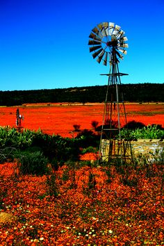Places to visit in South Africa. Namaqualand is famous for its impressive fields of Namaqua daisies and other wildflowers. Farm Windmill, Old Windmills, Beautiful Places, Beautiful Pictures, Old Barns, Country Barns, Le Moulin, African Art, Wild Flowers