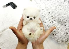 This will be my next dog <3
