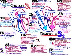 Hanson's Anatomy - Where the art of procrastination meets the study of medicine. The vibrant anatomy & medical notes I created to get through med school. Best Nursing Schools, Nursing School Notes, Medical School, Cardiac Nursing, Nursing Mnemonics, Nurse Practioner, Critical Care Nursing, Nursing Students, Medical Students