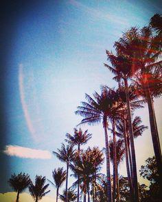 #bogotá #palmeras #photography #naturalphotography #jardínbotánico #leginik #palmtree