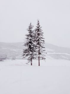 Pine trees in snowy land I Love Winter, Winter Is Coming, Winter Snow, Winter White, Winter Christmas, Winter Magic, Snow White, Seasons Of The Year, Winter Beauty