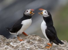 The duet by Richard McManus on 500px
