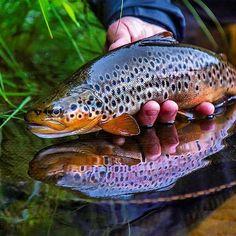 Pheeeeeesh :@blackflyeyes #fishing #trout #Norway #keepitsimple - Book your next fishing trip on Amberjack.com today.