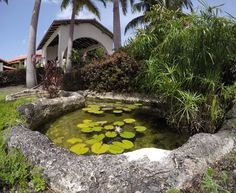 Sugar Cane Club and Spa is one of those hotels which is tucked away in the northern part of Barbados overlooking the North West coast. Barbados, Garden Bridge, West Coast, Golf Courses, Exotic, Spa, Exterior, Outdoor Structures, Club