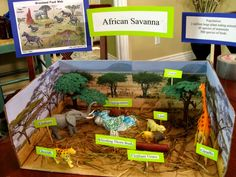 Savanna Ecosystem, Savanna Biome, Grassland Biome, Grassland Habitat, Science Fair Projects, School Projects, Projects For Kids, Diorama Kids, Shoe Box Diorama